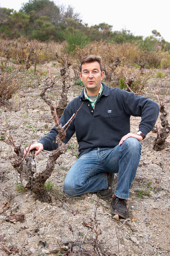 Gilles Contrepois Domaine Grand Guilhem. In Cascastel-des-Corbieres. Fitou. Languedoc. Vines trained in Gobelet pruning. Old, gnarled and twisting vine. Owner winemaker. The vineyard. France. Europe.