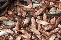 Frest caught fish, Tema, Ghana..Photograph by Peter E. Randall