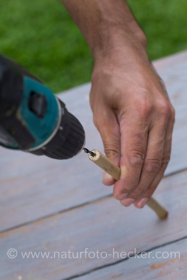 Wildbienen-Nisthilfe aus Bambus, Bambusstange, Bambusstangen, Bambus-Nisthilfe, Bambusstab, Bambusstäbe. Das Mark innerhalb der Bambusröhre wird mit einer Akku-Bohrmaschine entfernt. Wildbienen-Nisthilfen, Wildbienen-Nisthilfe selbermachen, selber machen, Wildbienenhotel, Insektenhotel, Wildbienen-Hotel, Insekten-Hotel