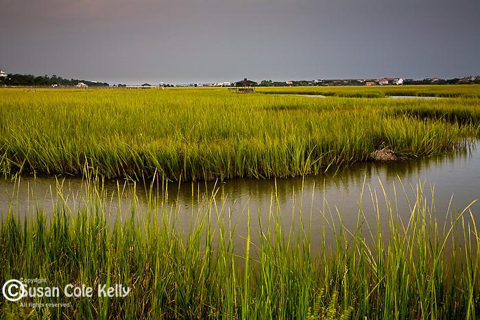 Pawleys Island saltmarsh, Carolina coast, SC, USA