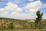 Lahav Forest in the Shephelah