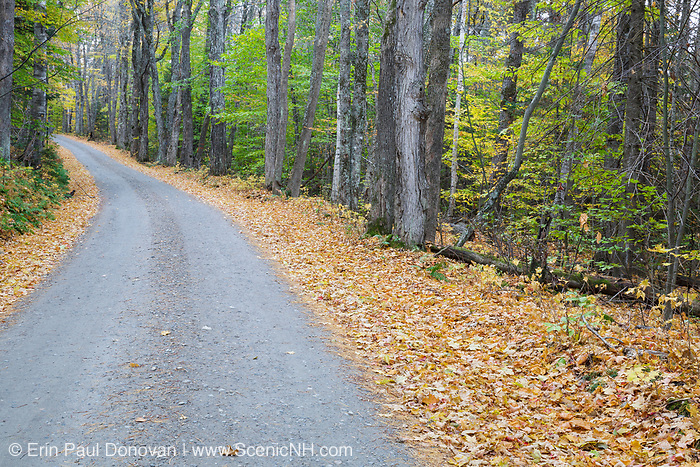 Leaf drop along Long Pond Road (old North and South Road) in Benton, New Hampshire USA during the autumn season.