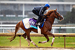 November 1, 2018: Line of Duty (IRE), trained by Charlie Appleby, exercises in preparation for the Breeders' Cup Juvenile Turf at Churchill Downs on November 1, 2018 in Louisville, Kentucky. Alex Evers/Eclipse Sportswire/CSM