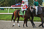 NEW ORLEANS, LA - FEBRUARY 20:<br /> Uncle Walter #12, ridden by Javier Castellano in the Risen Star Stakes post parade for the Louisiana Derby Preview Race Day at Fairgrounds Race Course on February 20,2016 in New Orleans, Louisiana. (Photo by Steve Dalmado/Eclipse Sportswire/Getty Images)