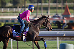 OCT 29 2014:Something Extra, trained by Gail Cox, exercises in preparation for the Breeders' Cup Turf Sprint at Santa Anita Race Course in Arcadia, California on October 29, 2014. Kazushi Ishida/ESW/CSM