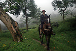 INDIA (West Bengal - Darjeeling) June 2007,Rajah Banerjee the owner of Makaibari Tea Estate in his tea garde on his horse back. . Makaibari produces the most expensive tea in the world. They produce the tea organically (without using any fertilizers or spraying pesticides)through permaculture.  Makaibari is situated at the misty foot hills of Darjeeling Himalayas - Arindam Mukherjee