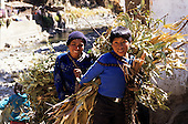 Paucartambo, Peru. Two Quechua Indian boys carrying large bundles of leafy branches.