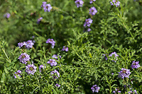 See in the Vista Verde native plant garden.