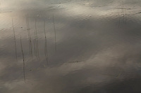 Reeds, Denali