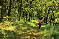 Walking through The Great Trossachs Forest and along The Great Trossachs Path, Glen Finglas Estate, Loch Lomond and the Trossachs National Park, Stirlingshire