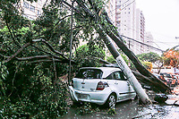Sao Paulo (SP), 27/11/2019 - Chuva-SP - Durante forte chuva na tarde desta quarta-feira (27), arvore caiu sobre carro e derrubou poste na rua Inacio de Araujo, regiao do Bras, zona central de Sao Paulo; nao ha informacoes sobre feridos e a energia esta cortada em parte da rua. (Foto: Carla Carniel/Codigo 19/Codigo 19)