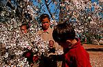 jean Lou e dans la palmeraie de Lhemrach. Fleurs d'amandiers Grand sud marocain. Maroc
