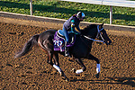 November 3, 2020: Vequist, trained by trainer Robert E. Reid Jr., exercises in preparation for the Breeders' Cup Juvenile Fillies at Keeneland Racetrack in Lexington, Kentucky on November 3, 2020. John Voorhees/Eclipse Sportswire/Breeders Cup/CSM