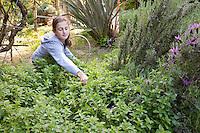 Girl harvesting oregano in children's herb garden with rosemary and lavender