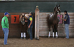September 19, 2014: Pennsylvania Derby contender Tapiture (7) and Cotillion contender Untapable school in the Parx paddock, under the watchful eye of Scott Blasi (left), assistant to their, trainer Steve Asmussen. Both are by Tapit; both are are owned by Winchell Thoroughbreds. Parx Racing in Bensalem, PA  ©Joan Fairman Kanes/ESW/CSM