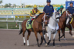 February 21, 2015: Cavorting on post parade before the start of the Davona Dale Stakes(G2). Gulfstream Park, Hallandale Beach (FL). Arron Haggart/ESW/CSM