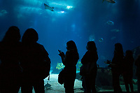 LISBON, PORTUGAL - OCTOBER 6: A group of people watch the main tank of the oceanarium in Lisbon, on October 6, 2020.<br /> The Oceanário de Lisboa is a public aquarium wich usually received more than a million visitors a year. Due to COVID19 pandemic it has  implemented the reduction in the number of visitors, performance of frequent hygiene actions for spaces, and mandatory use of a mask during the visit. <br /> Portugal has recorded 2,032 deaths and 80,312 cases of infection, with 27,568 cases now active.<br /> (Photo by Luis Boza/VIEWpress via Getty Images)