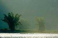 Lush bamboo trees on the banks of the Li Jiang river, Yangshuo, Guangxi, China.