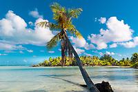 Palm tree over the turquoise water of Bora Bora lagoon, a beautiful, romantic honeymoon destination, near Tahiti, French Polynesia, Pacific Ocean