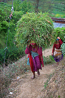 Women carry a huge load from the fields near Bungamati Village, Nepal, Kathmandu