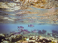 Belize snorkeling 2019