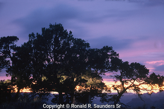 BEAUTIFUL SUNSET THROUGH TREES IN GRAND CANYON