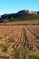 Chateau Pech-Redon. La Clape. Languedoc. France. Europe. Vineyard.