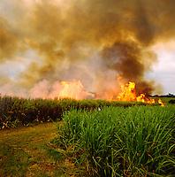 Burning off sugar cane plantation prior to harvest.  Kenya. Western District..