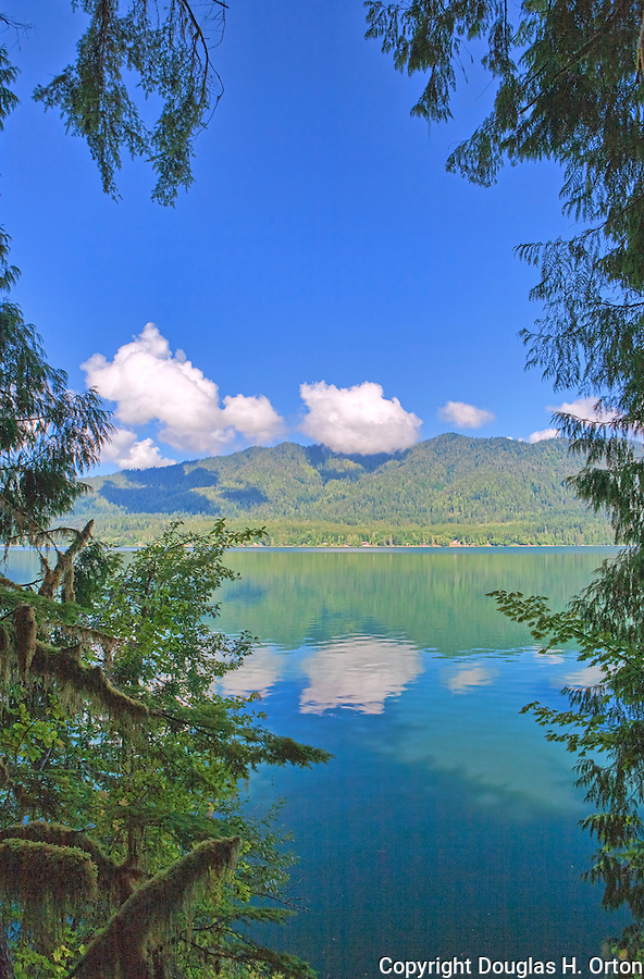 Lake Quinault Olympic Peninsula