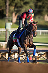 ARCADIA, CA - NOVEMBER 03: Miss Temple City, owned by Sagamore Farm, LLC, Allen Rosenblum & The Club Racing LLC and trained by H. Graham Motion, exercises in preparation for the Breeders' Cup Mile at Santa Anita Park on November 03, 2016 in Arcadia, California. (Photo by Alex Evers/Eclipse Sportswire/Getty Images)