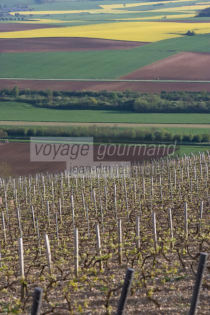 Europe/France/Bourgogne/89/Yonne/Irancy: Paysages du vignoble d'Irancy et vallée de l'Yonne au printemps