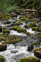 Natürlicher, naturnaher Bach in Skandinavien, Waldbach, rauschendes Wasser