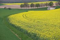 Europe/France/Bourgogne/89/Yonne/env de Tonnerre: Paysage agricole Champ de Colza en fleur, chemin et grange