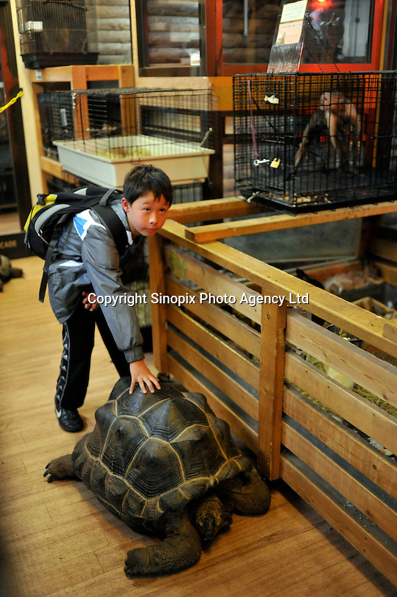 A Japanese schoolboy poses for a photograph with a Giant tourtoise at the 'Noah inner City Zoo', a pet shop that sells exotic animals. The Noah Inner City Zoo is a pet shop that sells exotic animals. The 'zoo' claims to have more than 300 species for sale, many of which are rare and some are endangered.