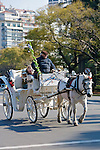 Horse Drawn Carriages