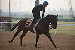 DUBAI,UNITED ARAB EMIRATES-MARCH 23: Wild Dude,trained by Michael Halford,exercises in preparation for the Dubai Golden Shaheen at Meydan Racecourse on March 23,2017 in Dubai,United Arab Emirates (Photo by Kaz Ishida/Eclipse Sportswire/Getty Images)
