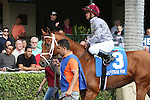 HALLANDALE BEACH, FL - JANUARY 14:  #3 Sandiva (IRE) with jockey Javier Castellano on board heads to the track for the 19th running of the Marshua's River G3 Stakes as the crowd watches at Gulfstream Park on January 14, 2017 in Hallandale Beach, Florida. (Photo by Liz Lamont/Eclipse Sportswire/Getty Images)