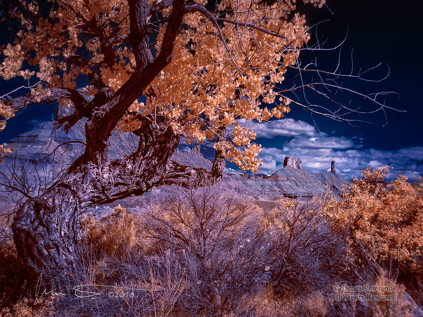 Cottonwood near Castle Valley, Utah (Infrared) ©2018 James D Peterson.  I came across this view near the Rocky Rapids stretch of the Colorado River during the recent Moab Photography Symposium.