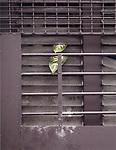 China, Hongkong, Mietwohnung, Pflanze, Asien, Stadt, Grossstadt, Illustration, Wohnen, Zimmerpflanze, Fenster, Fensterschlitze, Fensterschlitz, Blatt, Hong Kong Flora, gruen, grau (Bildtechnik: Farbprofil ECI-RGB)<br /> HKFDBD page 109<br />  ***Keine Social_Media Nutzung***<br /> <br /> Engl.: Asia, China, Hong Kong, urban flora, plant, window, leaves<br /> ***No social media use***