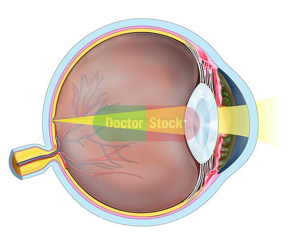 sagittal eyeball