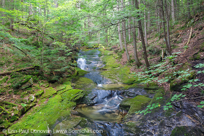 Mossy Glen along Carlton Brook in Randolph, New Hampshire during the summer months. This glen is near Nepalese Bridge, and can be reached by hiking the Groveway (a trail).