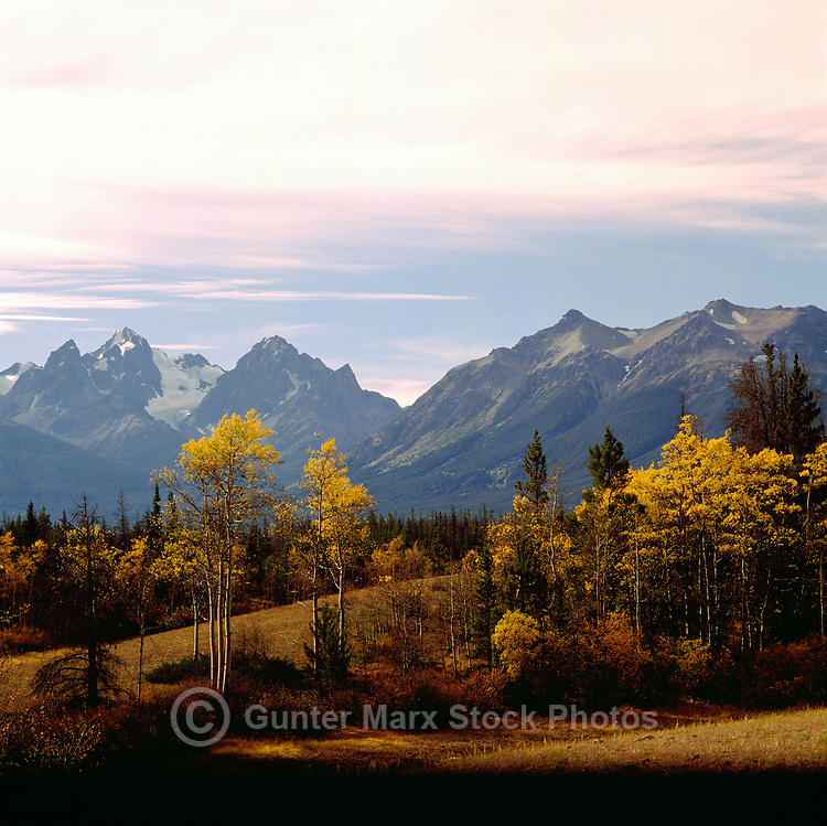 Cariboo Chilcotin Coast Region, BC, British Columbia, Canada - Coast Mountains and Trembling Aspen (Populus tremuloides) Trees, Autumn