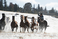 Cowboys and cowgirls living the western lifestyle. Cowboys in winter photography Fine Art Limited Edition Photography Of American Cowboys and Cowgirls by Jess Lee