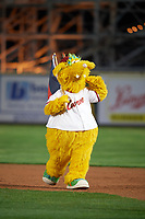 Altoona Curve mascot LoCo the Golden Locotami on the field after a game against the New Hampshire Fisher Cats on May 11, 2017 at Peoples Natural Gas Field in Altoona, Pennsylvania.  Altoona defeated New Hampshire 4-3.  (Mike Janes/Four Seam Images)