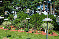 Bird feeders in garden backyard, habitat, lots of kinds, with squirrel baffles, lawn grass, blue sky, evergreen trees, mulched perennial beds, ornamental Miscanthus grass