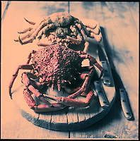 Europe/France/Bretagne/29/Finistère: Araignée de mer - Stylisme : Valérie LHOMME // France, Finistere, spider crab, photography styling by Valerie Lhomme