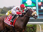 Stephanie's Kitten (no. 1) ridden by Irad Ortiz Jr. and trained by Chad Brown, wins the grade 1 Flower Bowl Invitational for older mares on October 3, 2015 at Belmont Park in Elmont (Sophie Shore/Eclipse Sportswire)