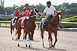 Cajun Breeze on post parade for The Smile Sprint Handicap (G2), Calder Race Course, Miami Gardens Florida. 07-07-2012.  Arron Haggart/Eclipse Sportswire.
