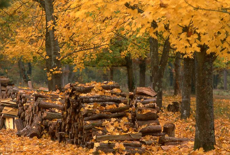 Europe, FRA, France, Val de Loire, Chambord, Autumn, Forest