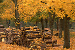 Europe, FRA, France, Val de Loire, Chambord, Autumn, Forest